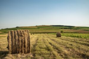 agriculture-countryside-cropland-1024x683